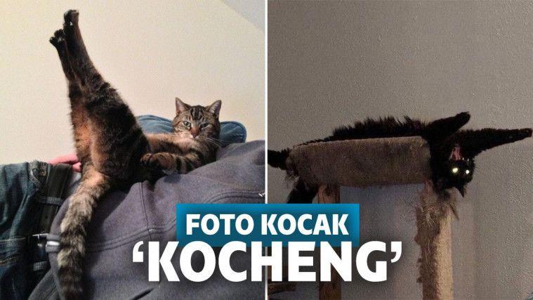 13 Foto Kocak Kucing Saat Bertingkah di Luar Nalar